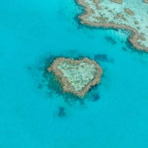 Juste au niveau du très réputé Heart Reef (corail en cœur), l'hydravion s'est posé, pour profiter d'un snorkeling très privé sur la grande barrière de corail.